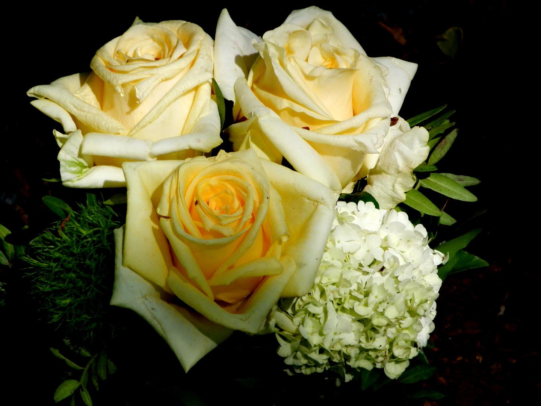 Liebes Rosen