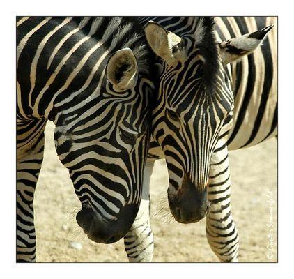 Liebesgeflüster im Hagenbeck's Tierpark