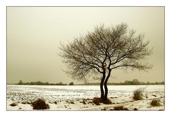 Liebesgeflüster im Schnee . . .