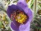 Liebesspiel in der Blüte