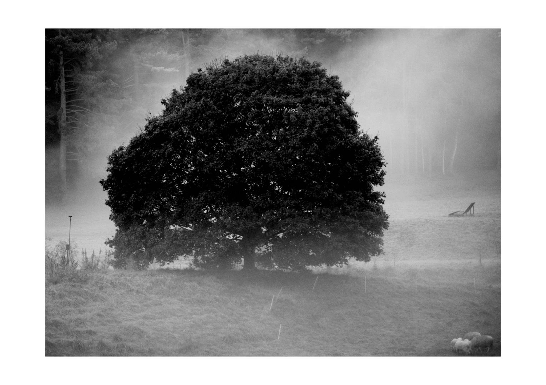 Lieblings-Baum