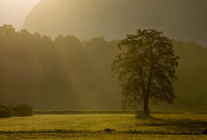 Lieblingsbaum im Morgenlicht