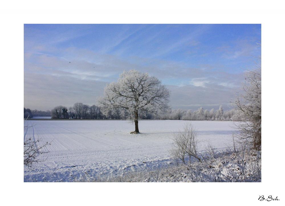 Lieblingsbaum im Winter ...