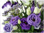Lieblingsblümchen in Lieblingsfarben