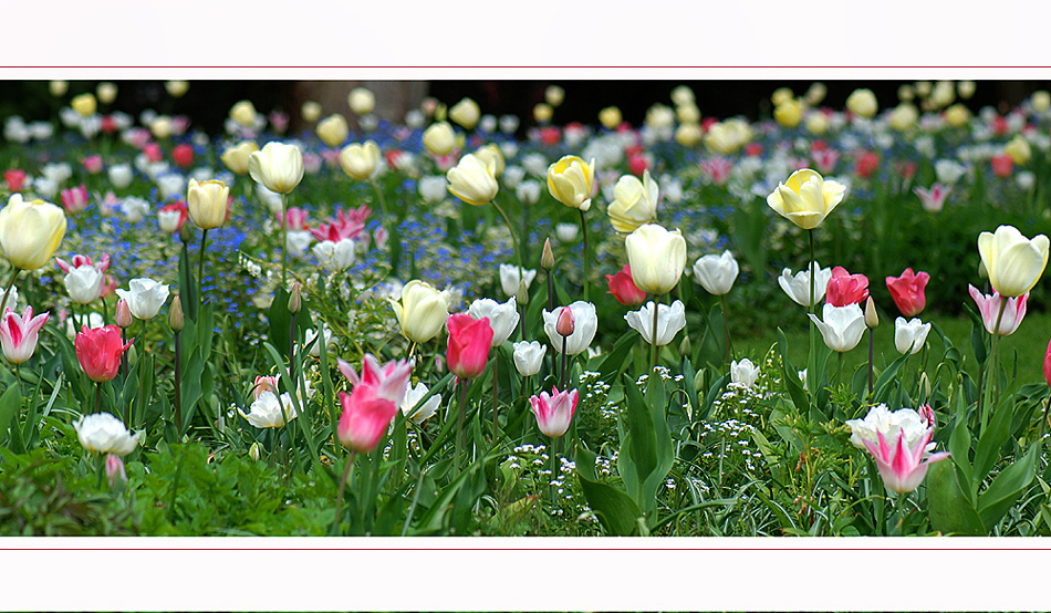 Lieblingsblumenwiese.....