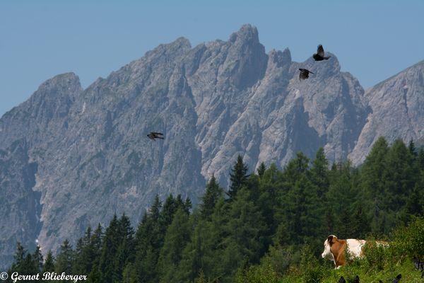 Liegende und fliegende Alpenbewohner