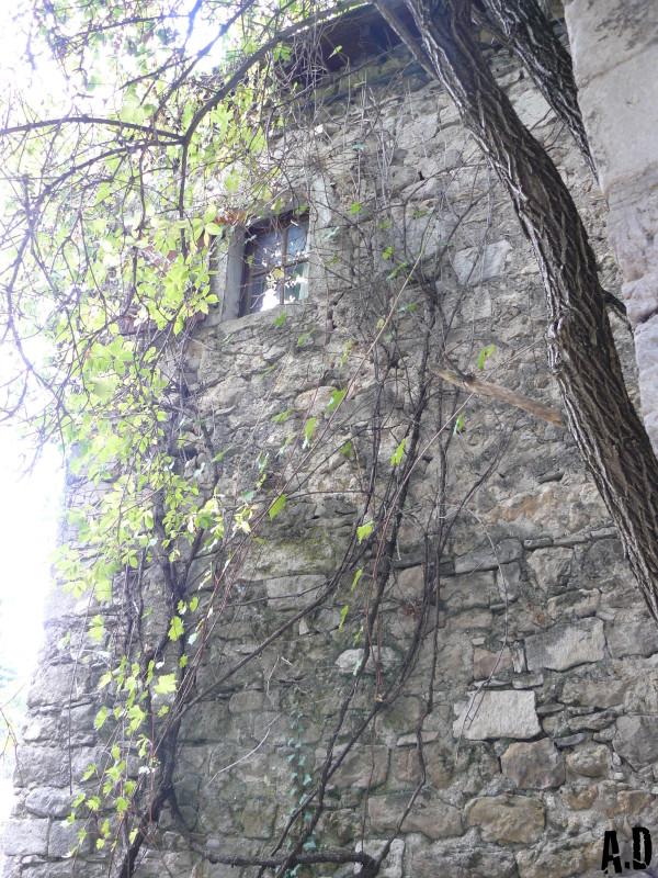 Lierre sur Château.