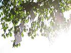Ließ in den Bäumen