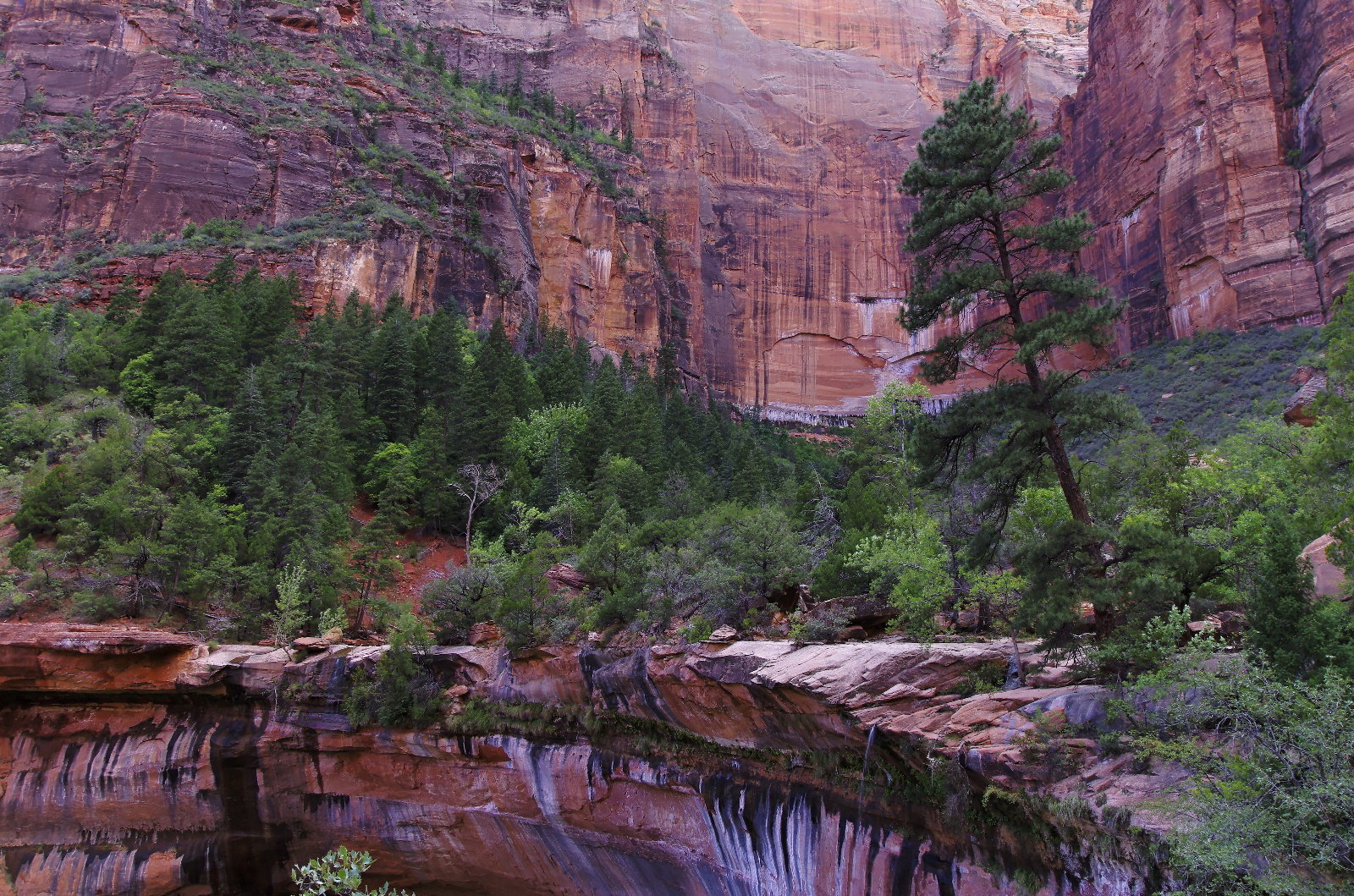 Life Above the Middle Emerald Pool - Zion National Park, Utah