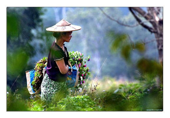 life of myanmar
