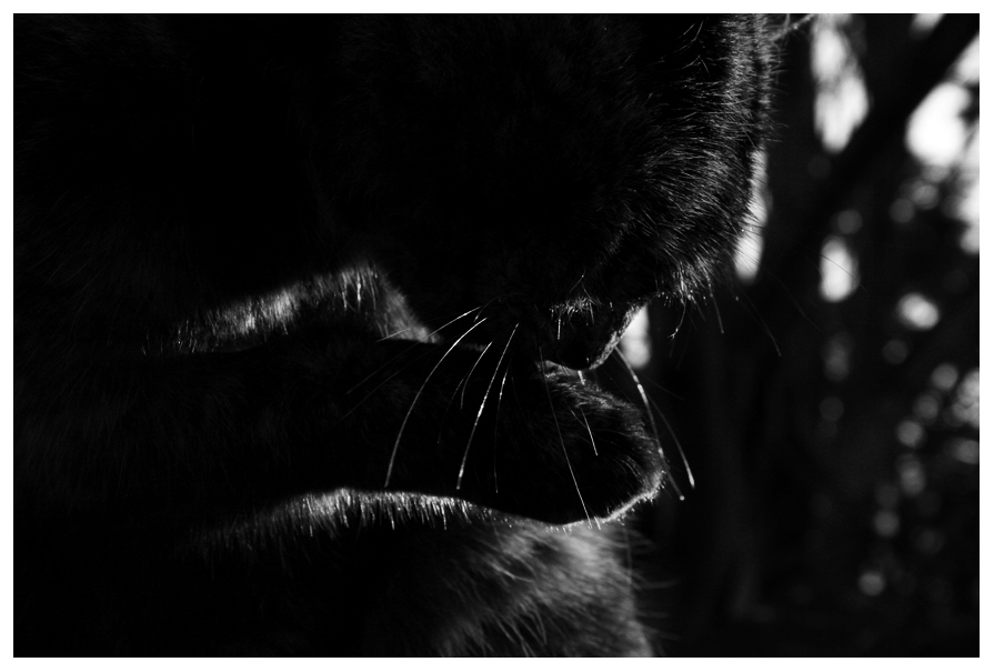 Light and Shadows 3 - The Cat