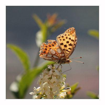 light as a butterfly