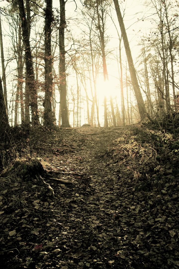Light Between Trees