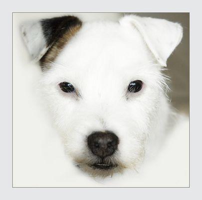 Light Dog