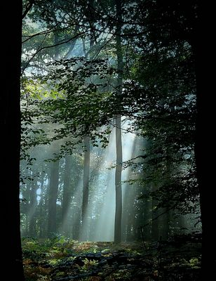 Light in the Forest (4)