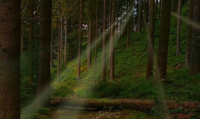 Light in the forest (7)