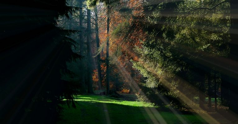 Light in the Forest (8)