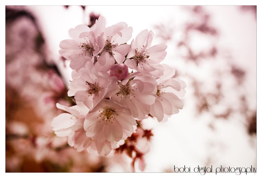 ..:: light pink ::..