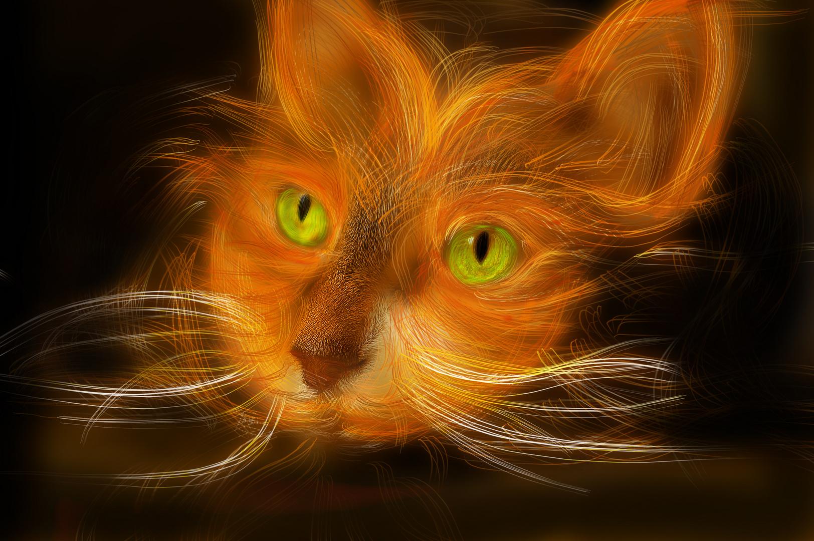 Light_Cat