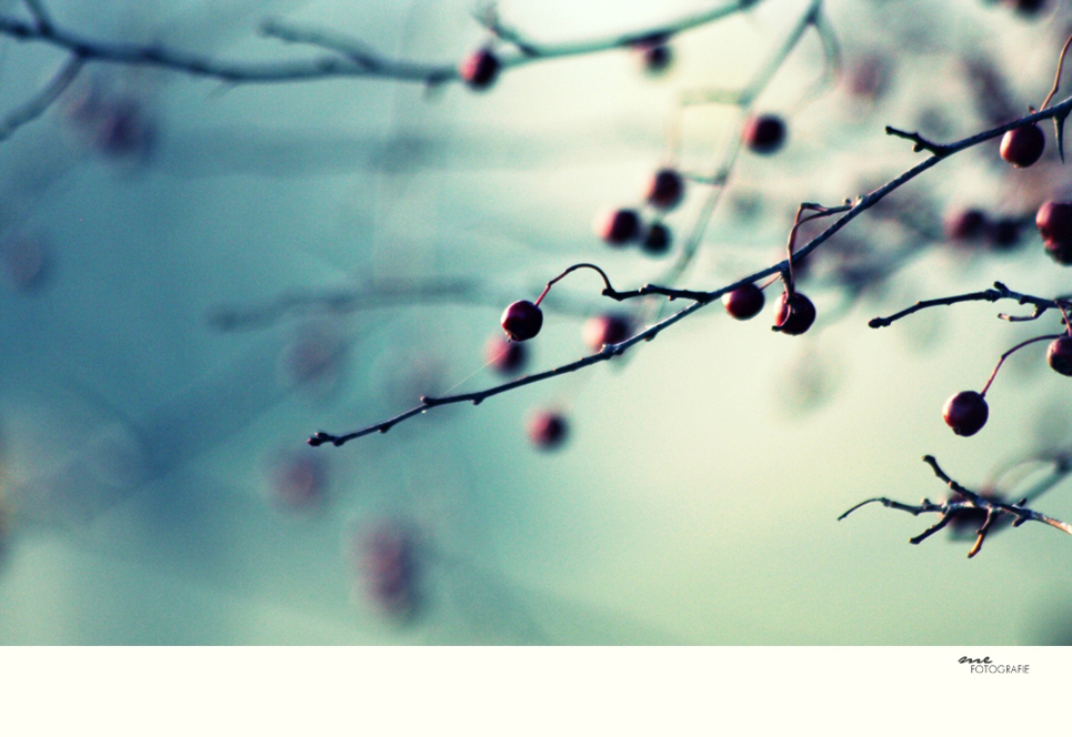 .lightful autumn.