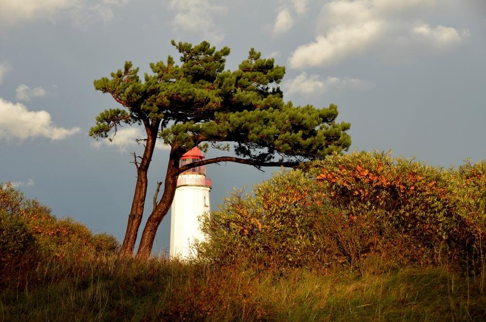 Lighthouse Hiddensee Dornbusch