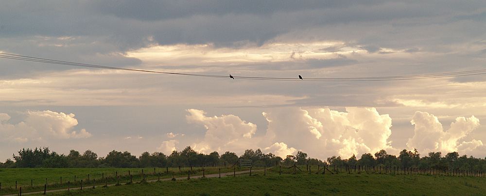 like a bird on a wire