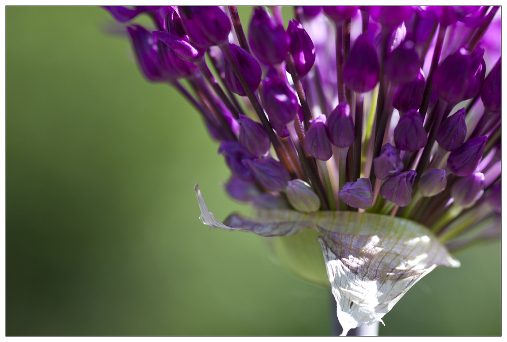 ...lila...