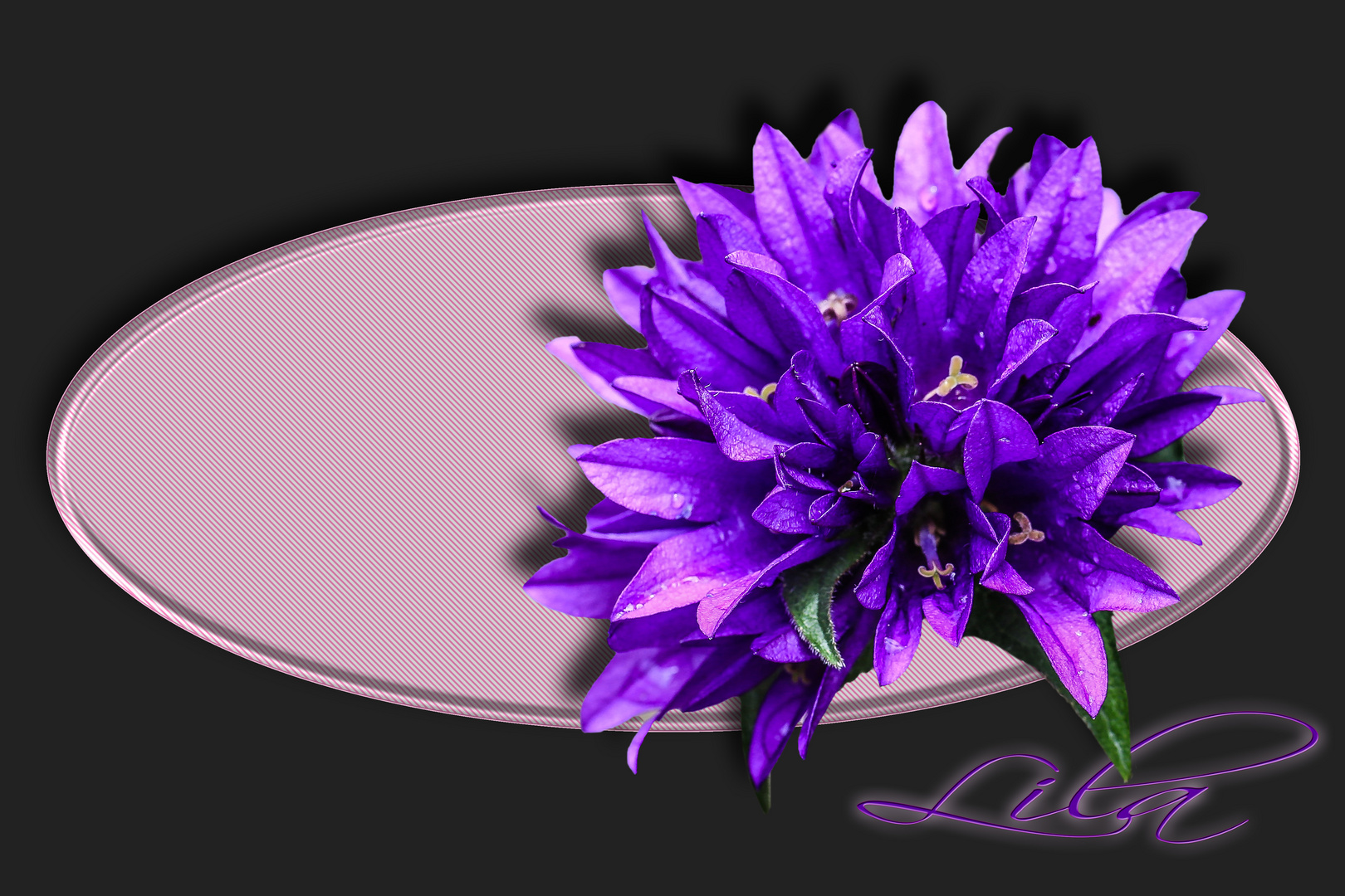 >> lila