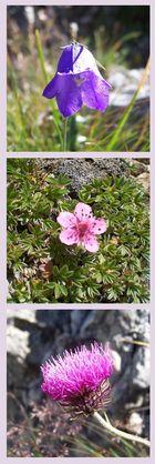 Lila Blüten in den Bergen