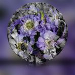 Lila Blüten in Kugel