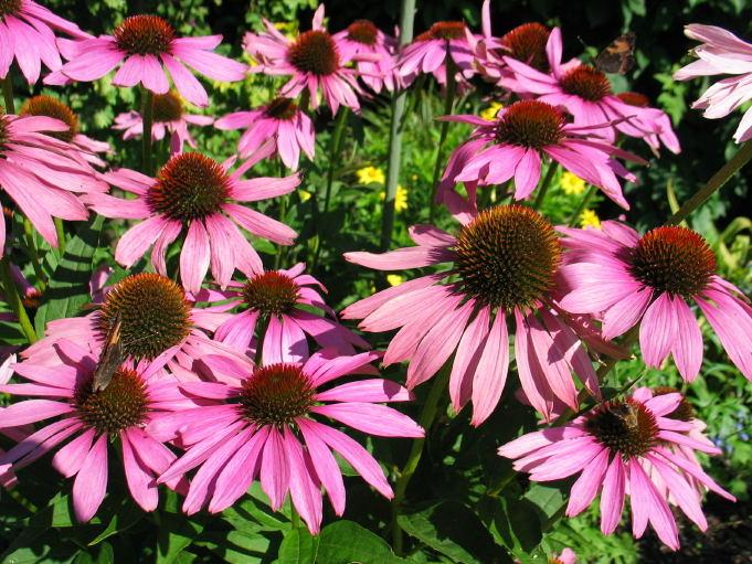 Lila Blütentraum