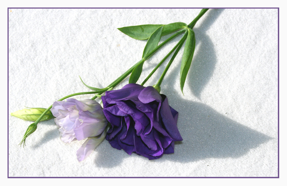 Lila gr n foto bild pflanzen pilze flechten for Lila und grun mischen
