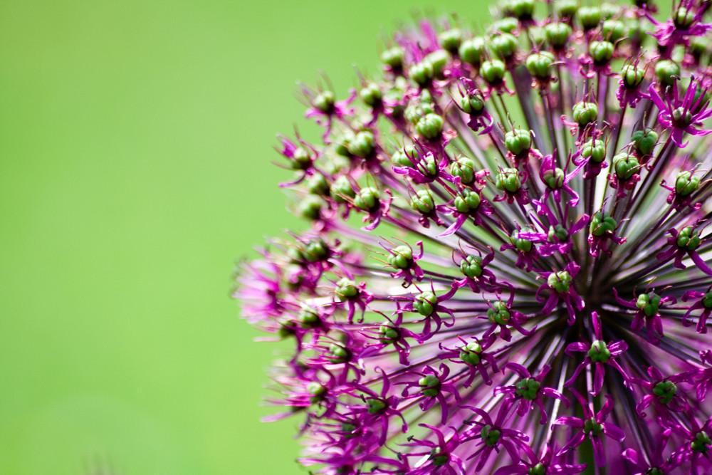 lila gr n foto bild pflanzen pilze flechten bl ten kleinpflanzen fr hling bilder auf. Black Bedroom Furniture Sets. Home Design Ideas