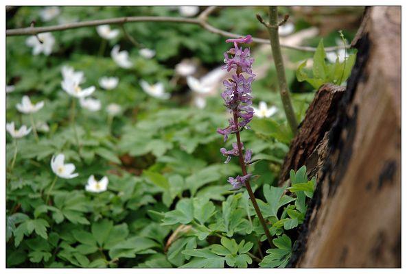 Lilac (colour)