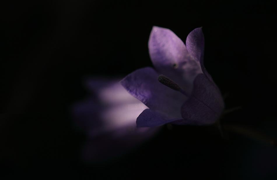 lila...laune
