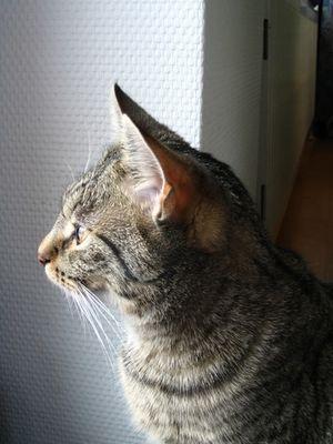 Lili beobachtet den Schnee am Fenster