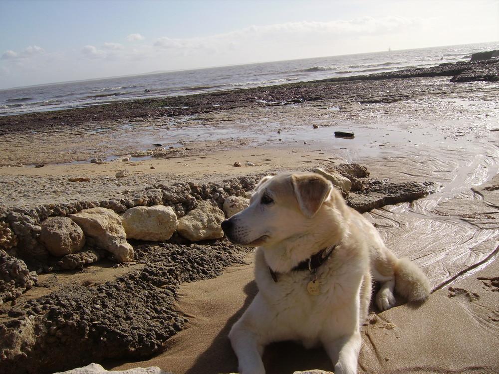 Lili et la mer