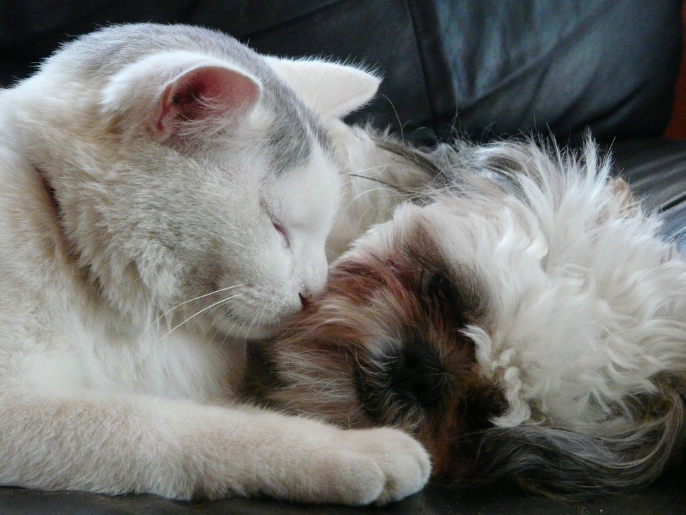 Lili et son chat Coco