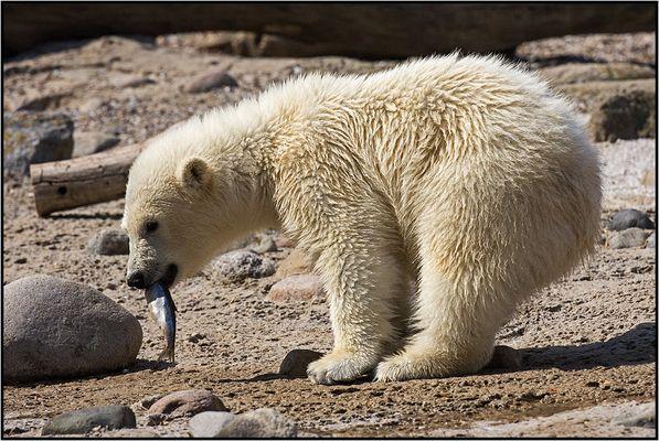 Lili - the polar baby