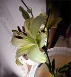 Lilie für Adele   O.