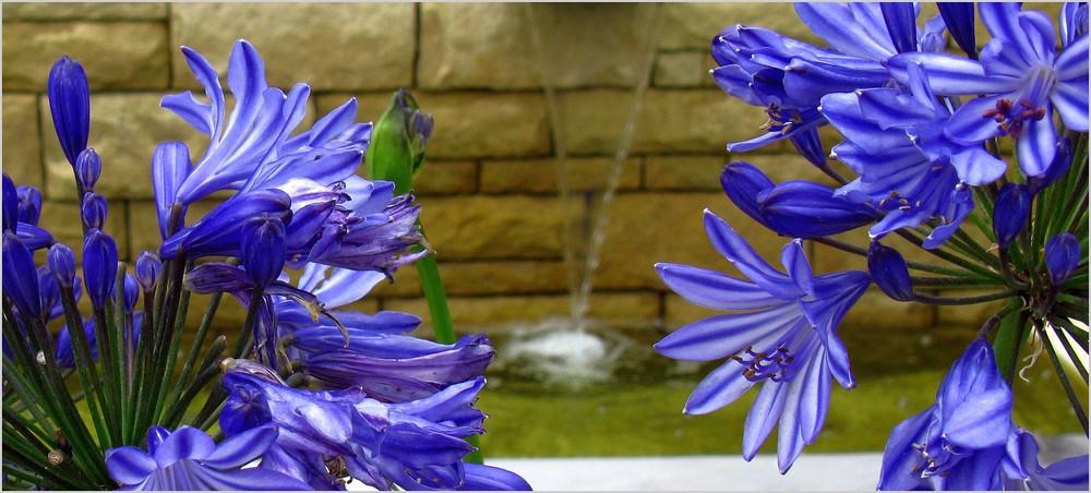 lilien foto bild pflanzen pilze flechten bl ten kleinpflanzen pflanzen u s w. Black Bedroom Furniture Sets. Home Design Ideas