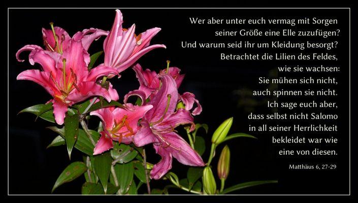 Lilien und Sorgen