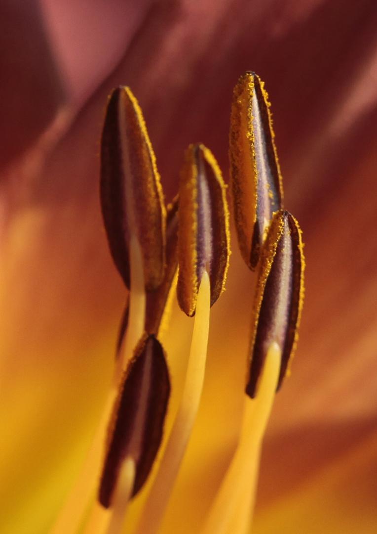 Lilienstempel