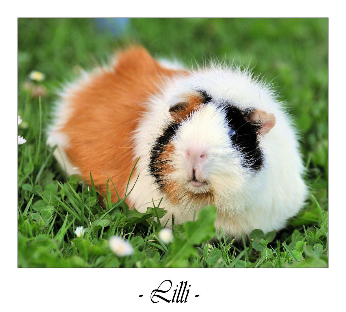.Lilli.