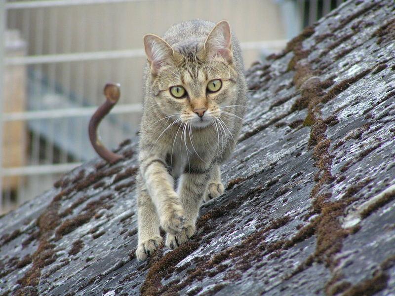 Lilli auf dem Dach