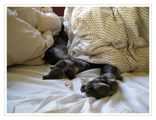 Lilli - Eine Doggenoma