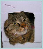 Lilli im Karton...