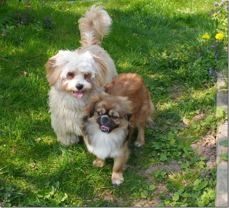 Lilly mit Lucky