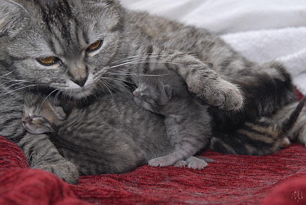 lilly und die babies 2
