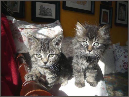 Lilly und Goofy